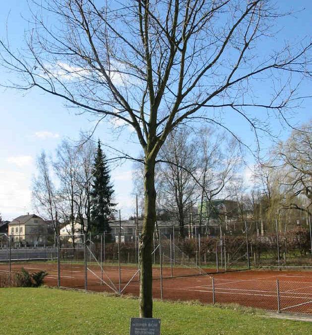 Berliner Eiche mit Hans-Leeb-Platz